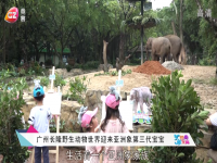 广州长隆野生动物世界迎来亚洲象第三代宝宝